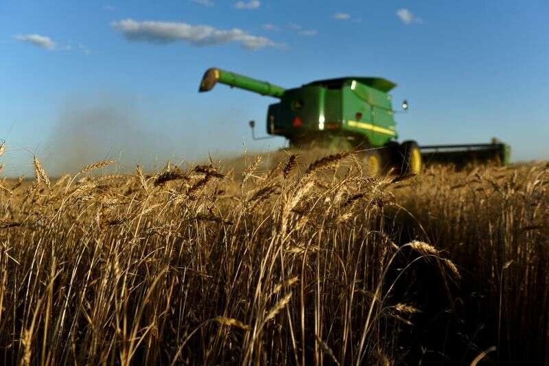 U.S. biały plantatorów pszenicy gotówki w Chinach snaps dostaw Reuters