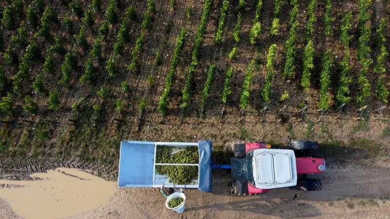 UE do rozszerzenia wsparcia na sektorów wina, owoców i warzyw przez Reuters
